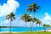 Florida Keys Palm trees in sunny day Florida US
