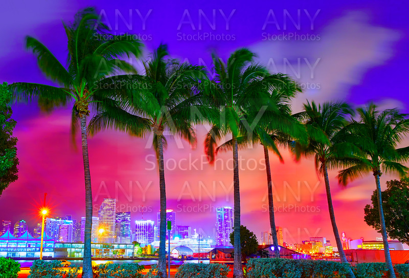 Miami skyline sunset with palm trees Florida