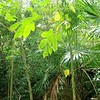 jungle rainforest atmosphere green background