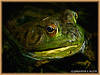 AMPHIBIANS : 1 gallery with 2 photos