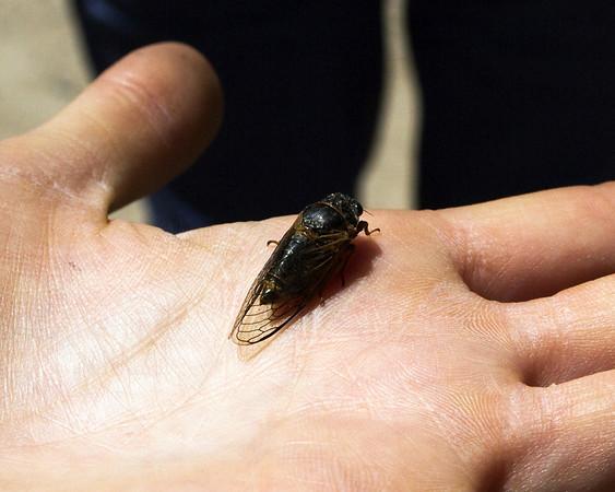 Kingdom - Animals - Animalia, Insects