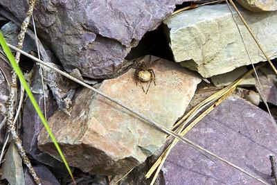 Kingdom - Animals - Animalia, Spiders