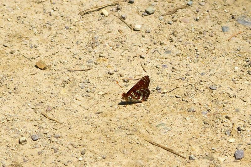 Taken at O'Brien Creek June 2011.