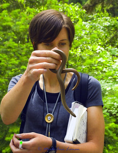 Taken July 5, 2011 near O'Brien Creek in Missoula, Co. with my naturalist class with the Montana Natural History Center.
