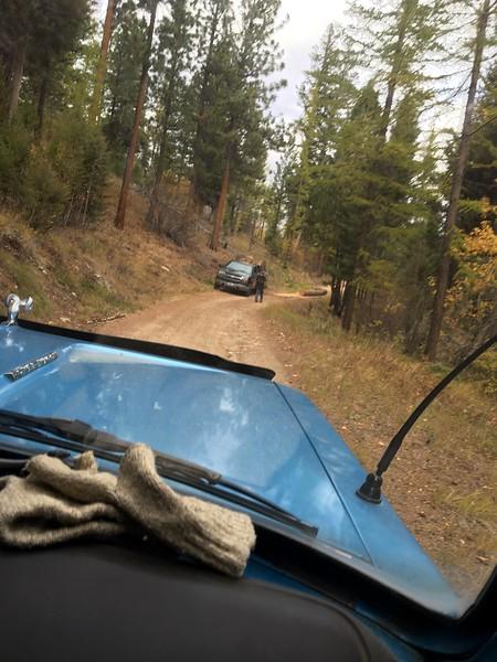 Bitterroot NF Gash Creek Tree Theft