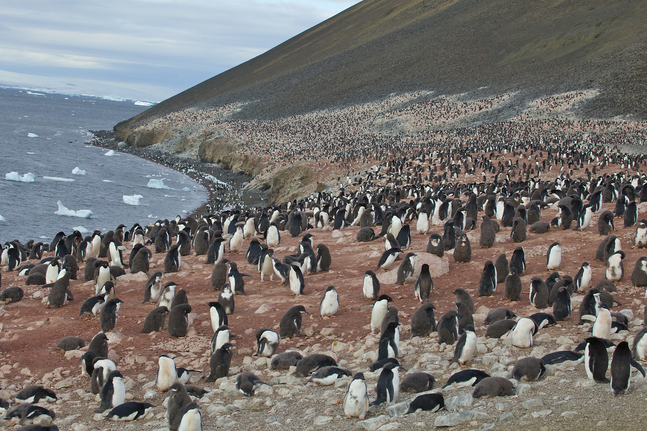 """This was our first encounter with the Adelies, which are the most """"traditional"""" looking penguin."""
