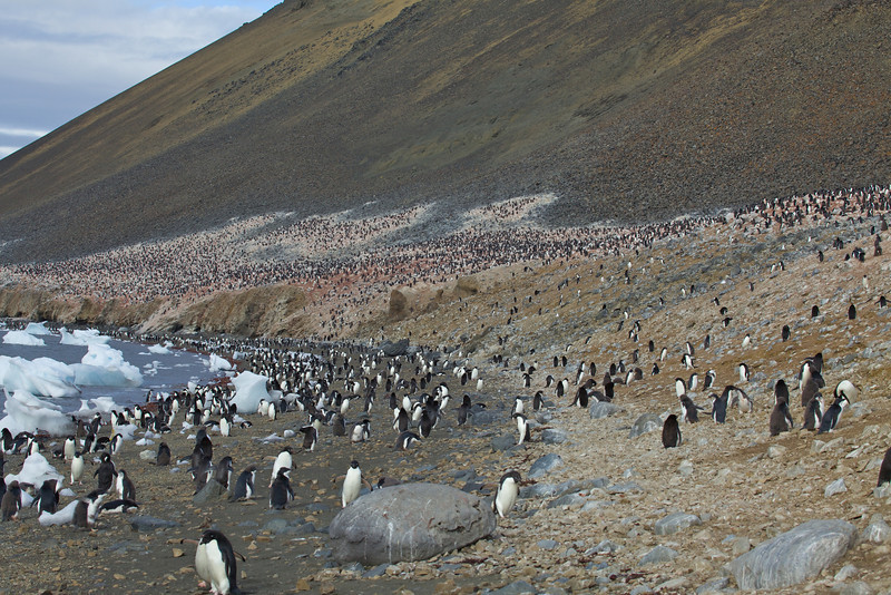 Over 17,000 Adelie penguins inhabit Devil Island.