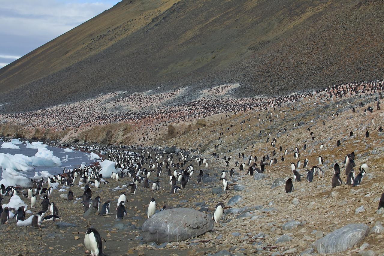 Over 17,000 Adelie penguins inhabit Devil Island.