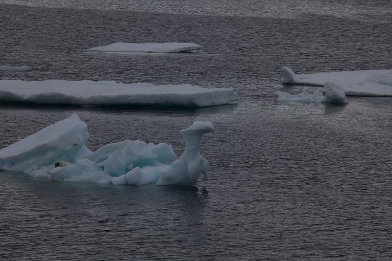 This iceberg looks like a Gecko.