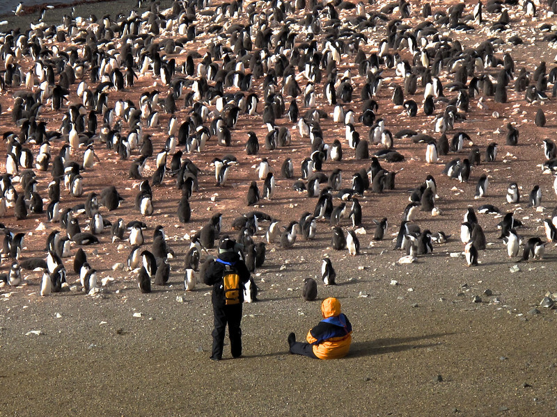 There are so many penguins here, that's it's worthwhile to just take time, relax and watch them.