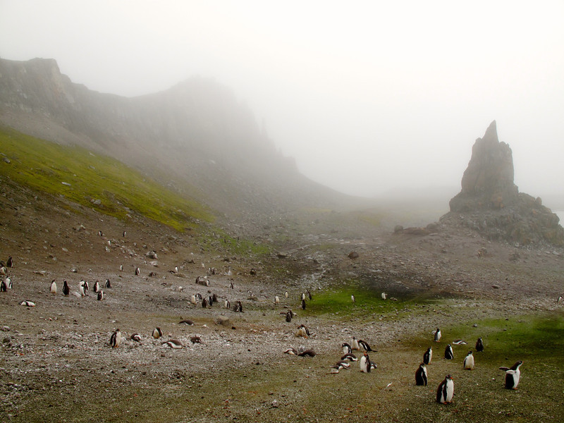 Gentoo and Chinstrap penguins are the two species of penguins found on Aitcho.