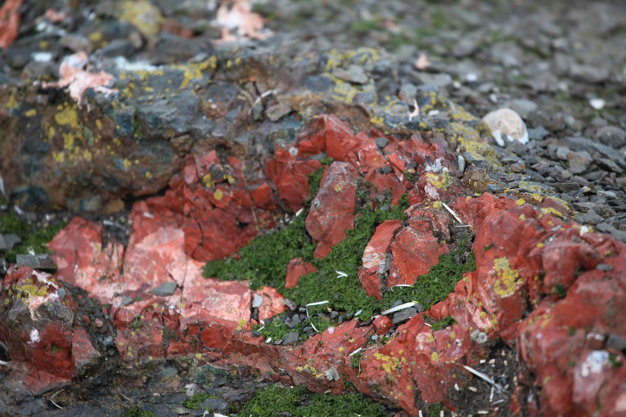 At Hannah Point, you can find small veins of Jasper running throughout parts of the rocky outcroppings.