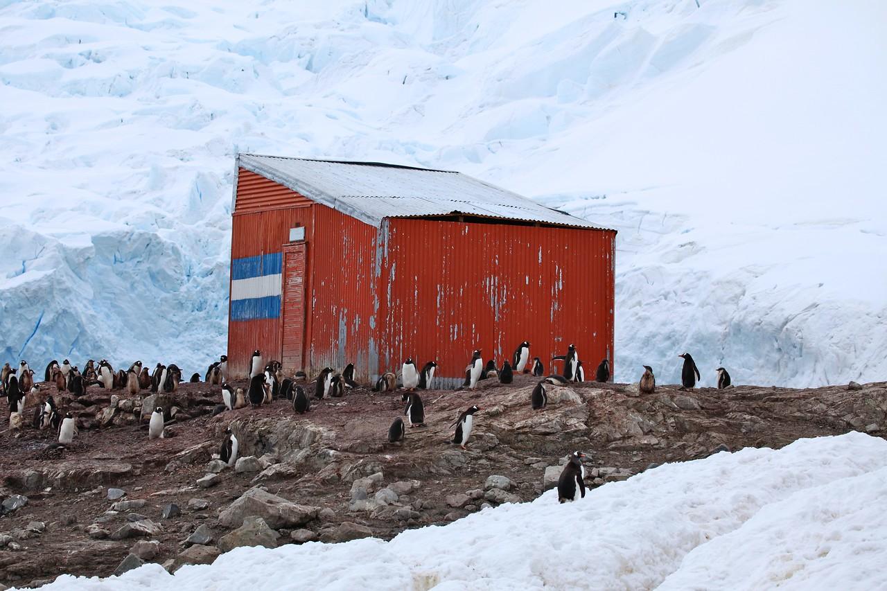 Penguins surround an Argentine refuge hut on Neko.
