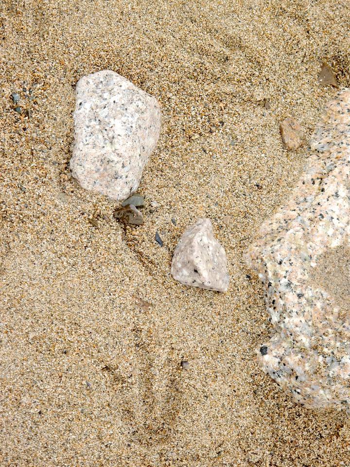 Penguin tracks.