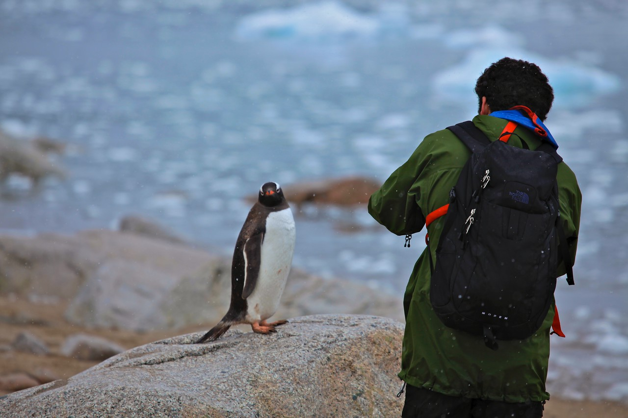 This penguin poses for a photo.