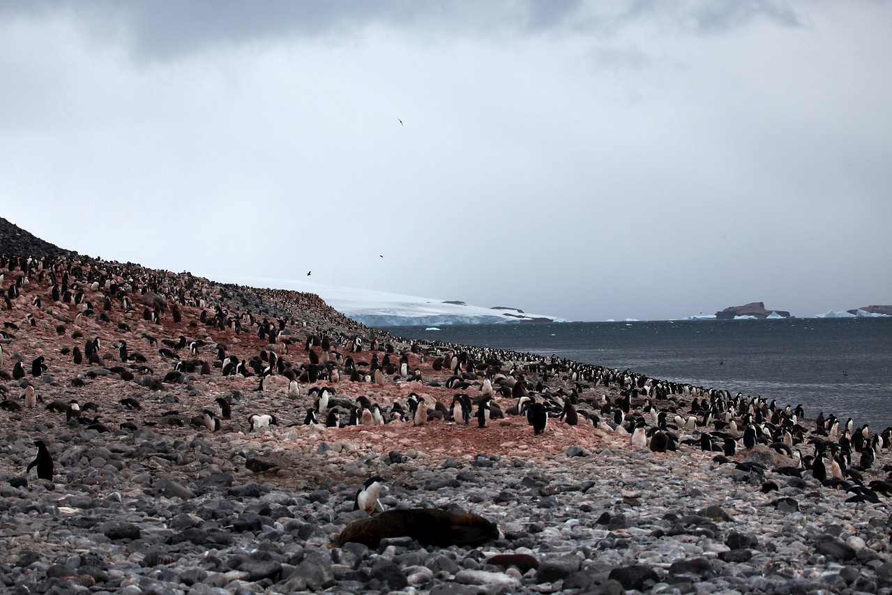 The amount of penguins on this island is amazing.