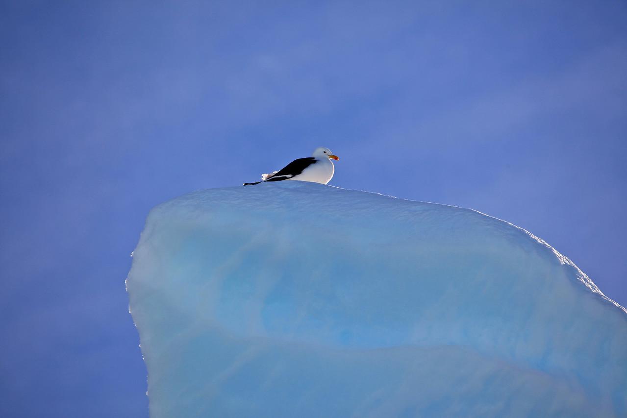 A storm petrel takes a short break and surveys the scene.
