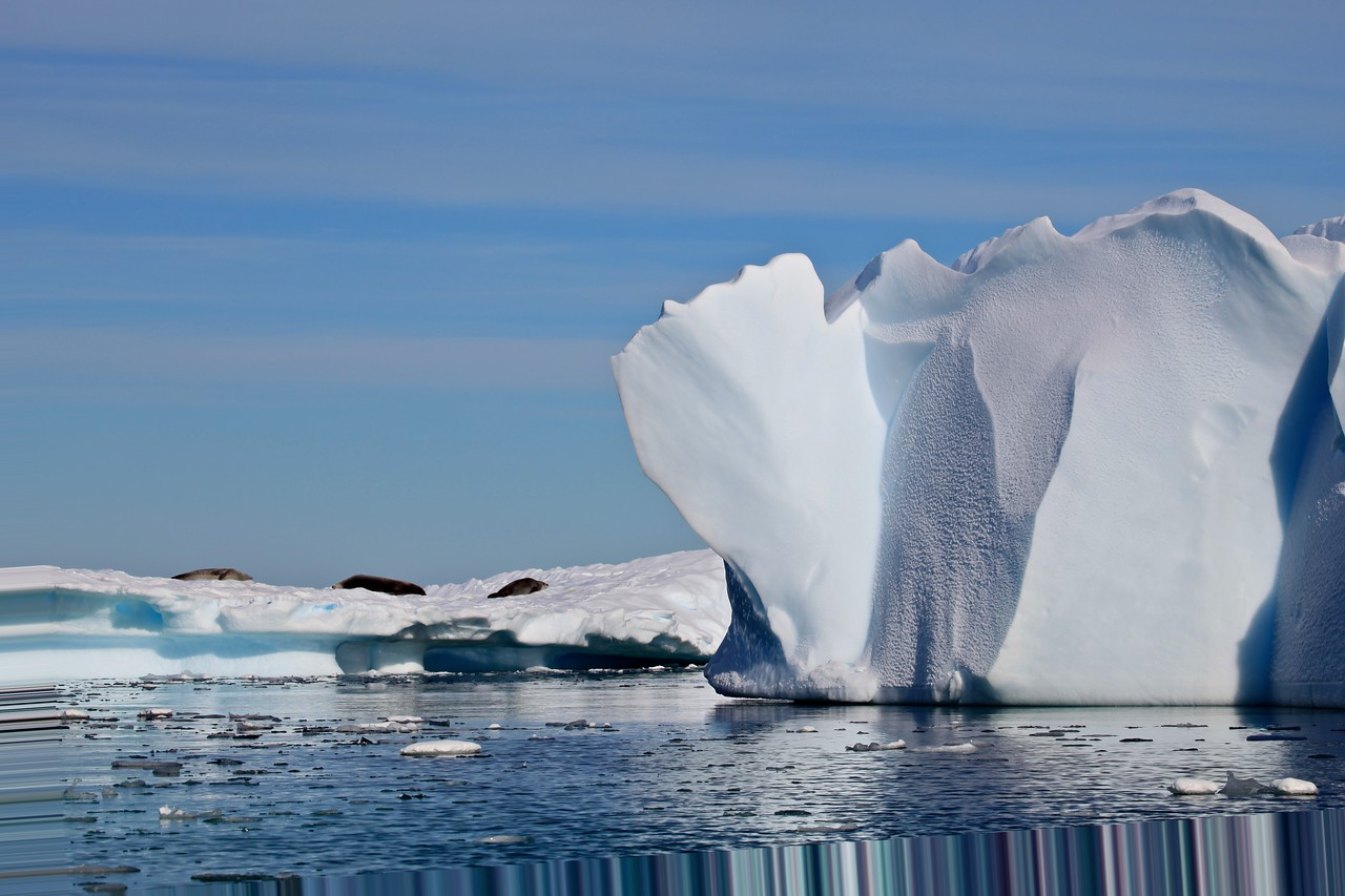 Many of the icebergs take on the shapes of other objects.  This for example looks like a large fan coral.