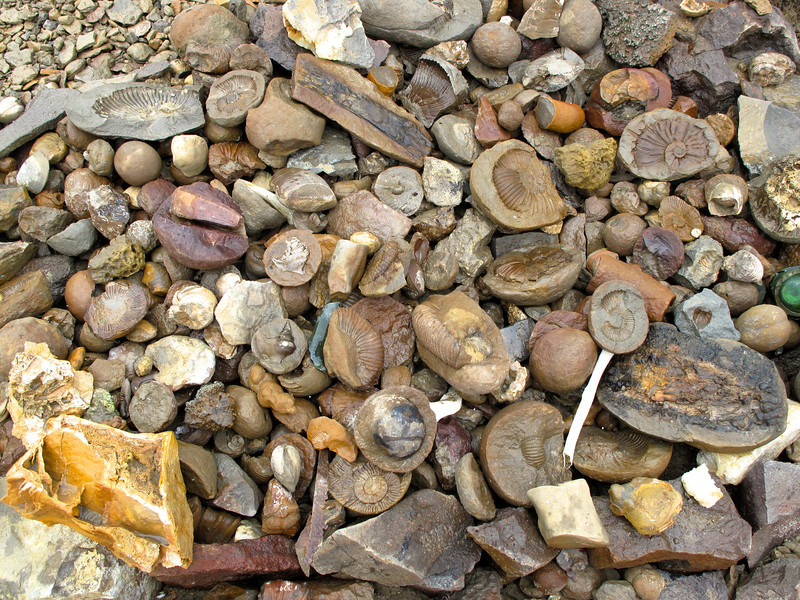 This collection of fossils was put together by a crew restoring the refuge hut on the island.