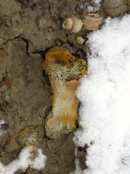 Bone along the beach.