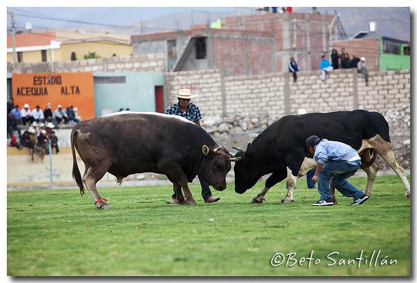 AREQUIPA 5DMKII 201111 - 1003+
