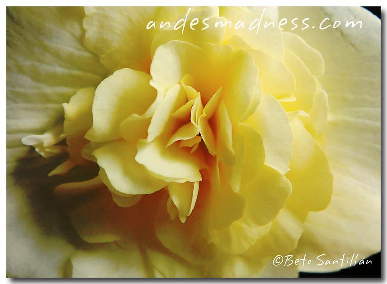 wild flower  5DMKII 060410-1577