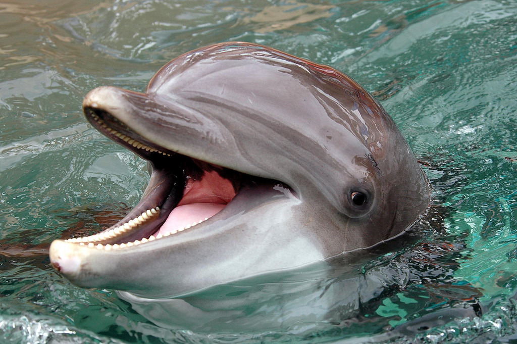 chatty dolphin - SeaWorld, FL