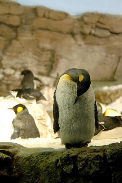 penguin taking a bow - SeaWorld