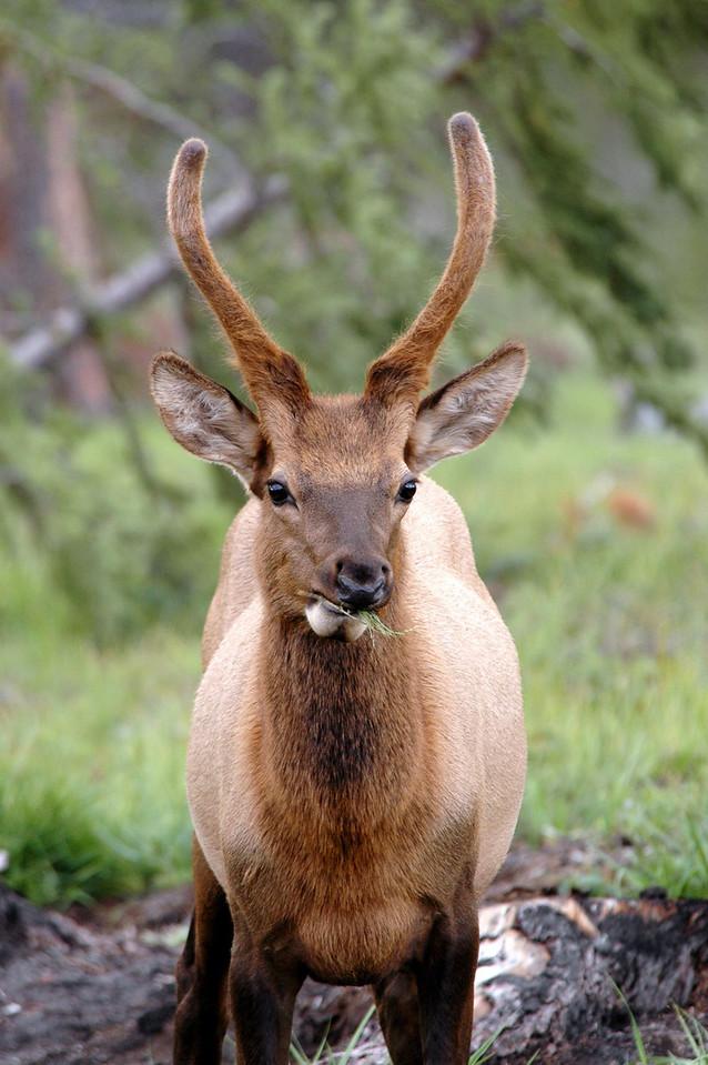 Maligne Lake Road - Jasper National Park, Canada
