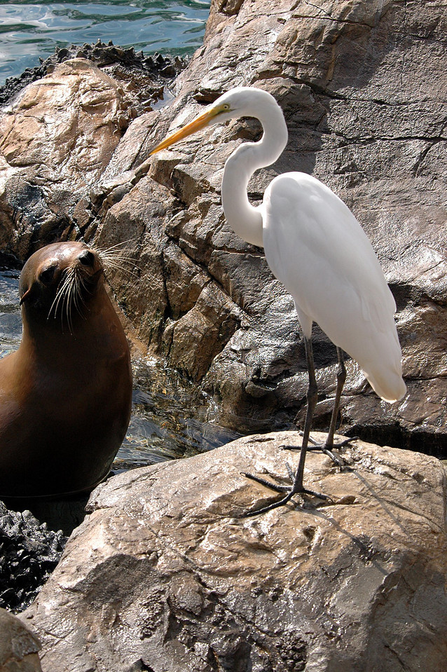 sea lion & great egret waiting for the fish to fly - SeaWorld, Florida