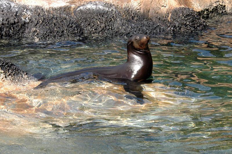 sea lion snoozing - SeaWorld