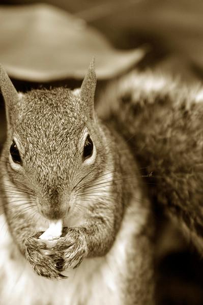 snacking squirrel - SeaWorld