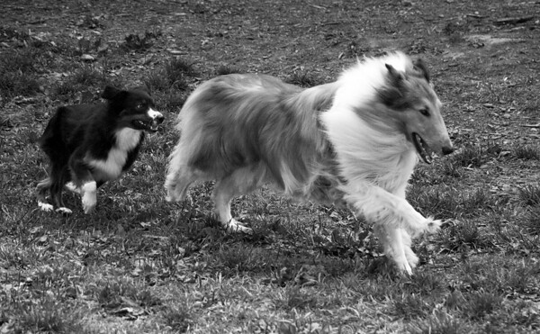 Dog Days of Summer 2010_KDS7796 bw