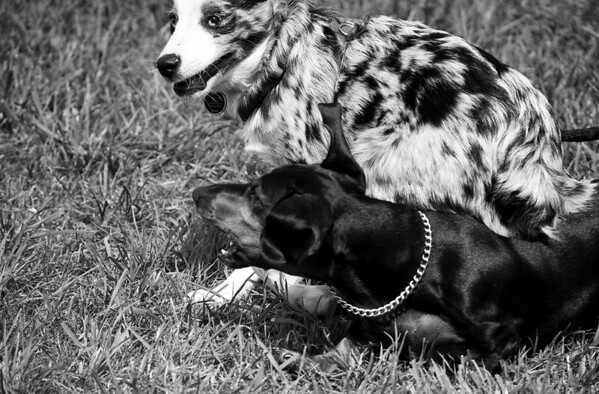 Dog Days of Summer 2010_KDS7727 bw
