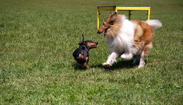 Dog Days of Summer 2010_KDS7805