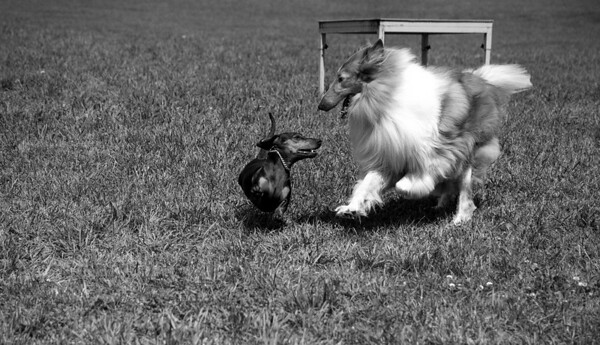 Dog Days of Summer 2010_KDS7805 bw