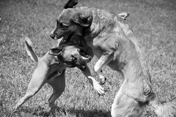 Dog Days of Summer 2010_KDS7738