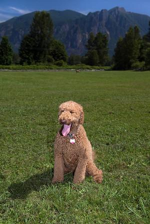 DogDays KDS_0291