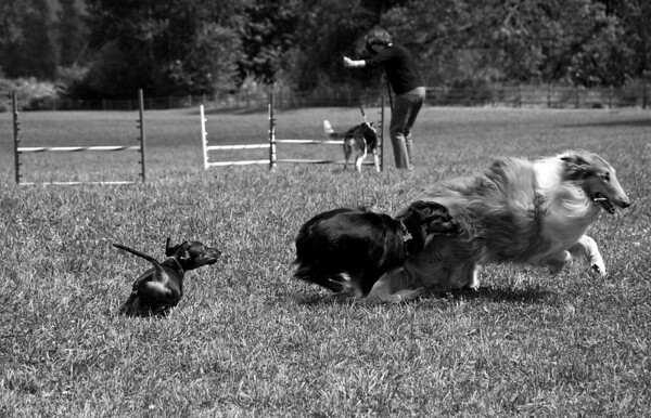Dog Days of Summer 2010_KDS7794 bw