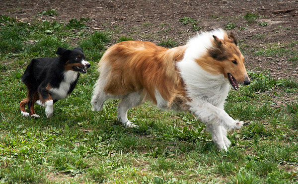 Dog Days of Summer 2010_KDS7796