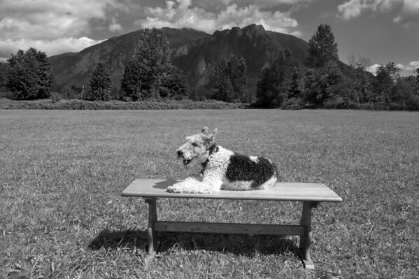 Dog Days of Summer _KDS6588 bw