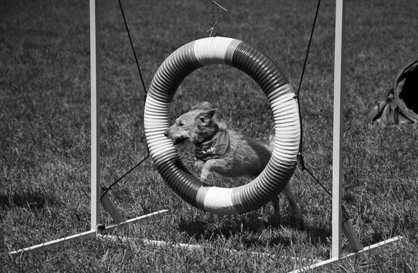 Dog Days of Summer 2010_KDS7778 bw