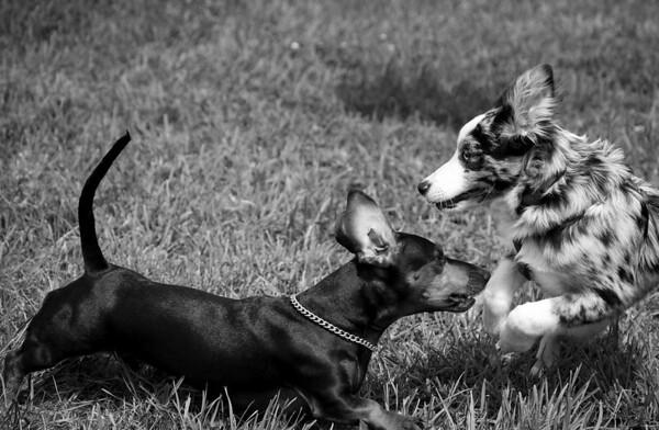 Dog Days of Summer 2010_KDS7732 bw