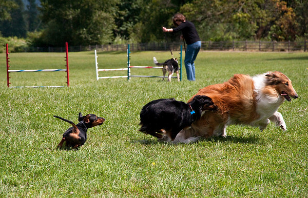 Dog Days of Summer 2010_KDS7794