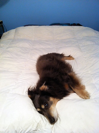 Boo the Bed-Hog 2-2012