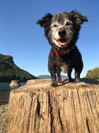 Ollie stumped - 11/2017