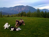 Elliot romping with friends - North Bend, WA 2009