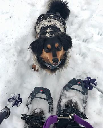 Finn keeping me company on the mountain