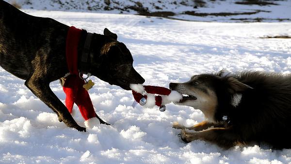 Karly & Elliot engage in a game of tug-o-collar<br /> Lake Keechelus, WA