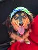 Finn sporting sun-visor